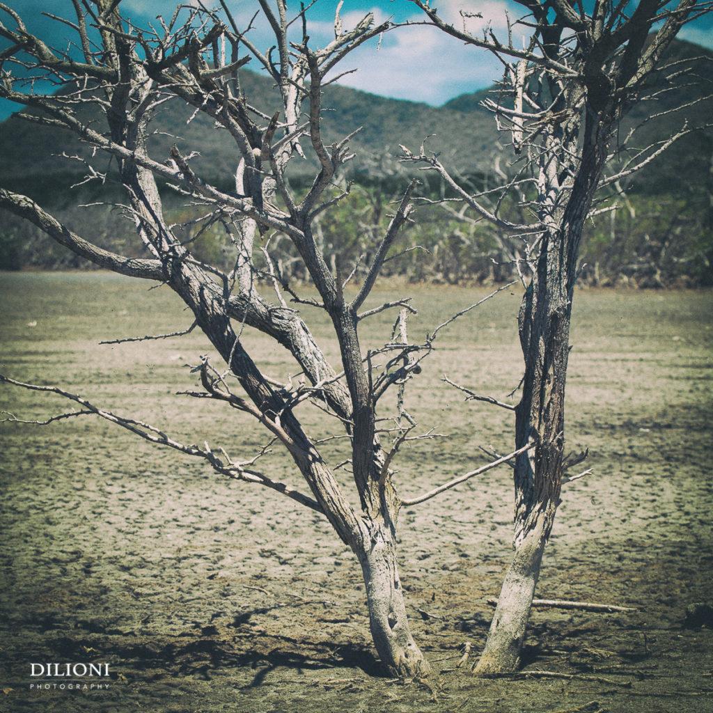 Dry plain