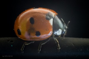 Lieveheersbeestje (op cover iPad)